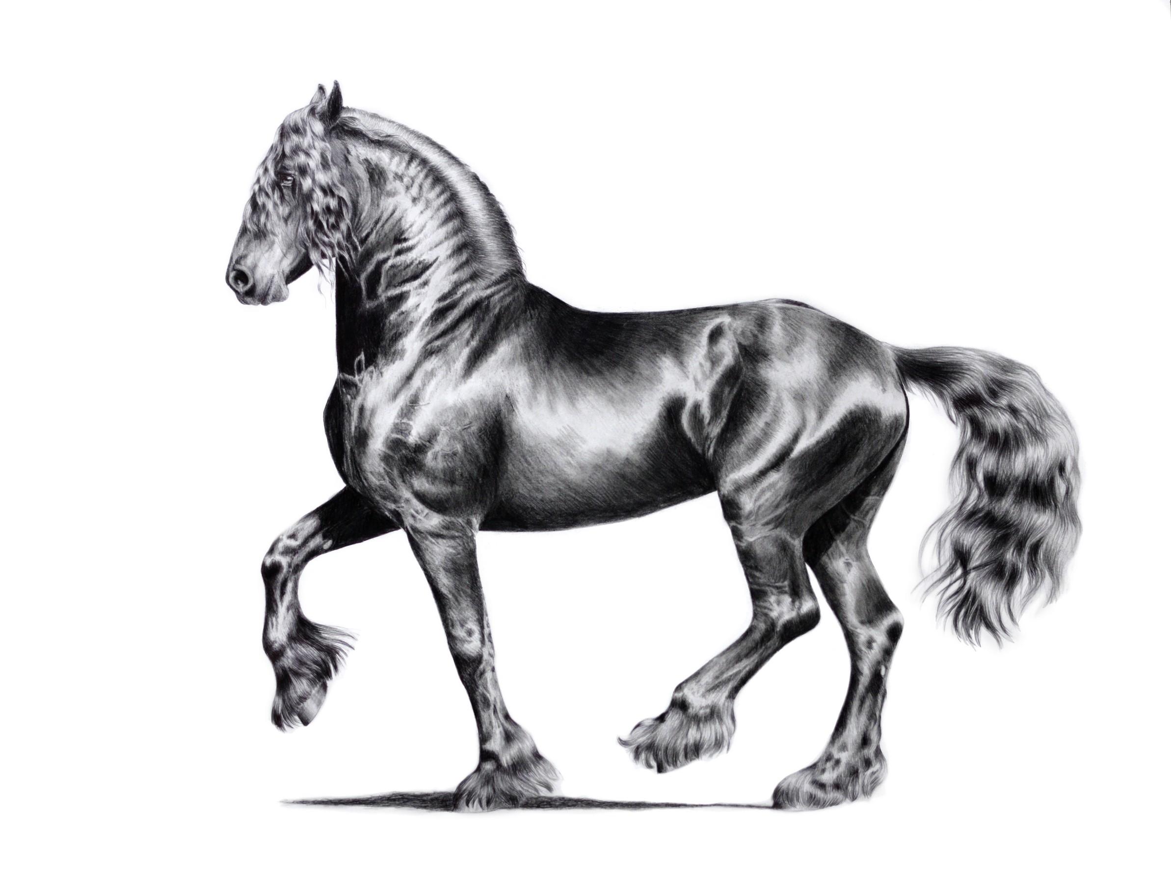 pferd mit reiter malen  malvorlagen gratis